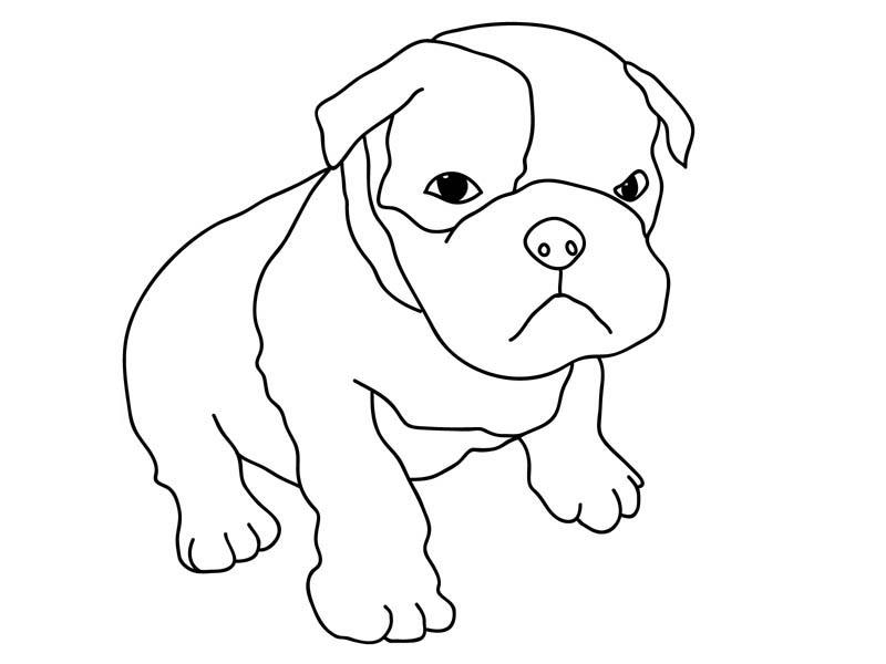 Pitbull, : Cute Pitbull Puppy Coloring Page