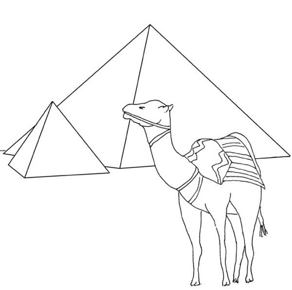 Pyramid, : Egypt Pyramid and Camel Coloring Page