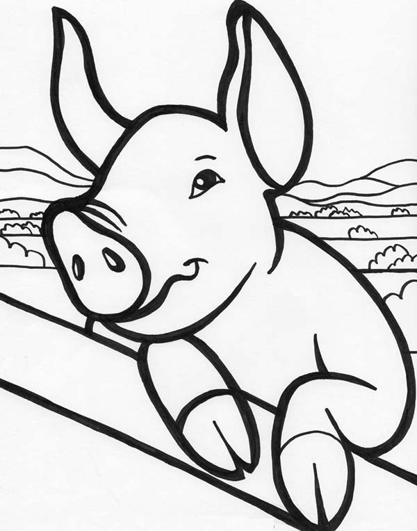 Pig, : Farm Animals Pig Coloring Page