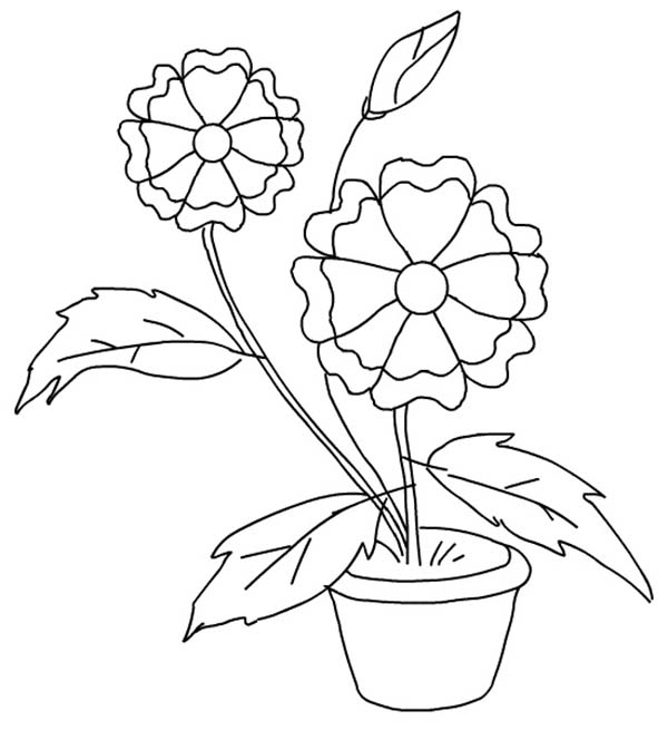 Plants, : Flower is Beautiful Plants Coloring Page