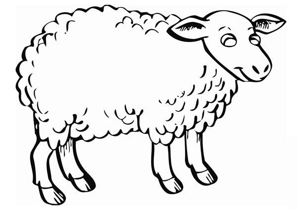 Sheep, : Fluffy Sheep Coloring Page