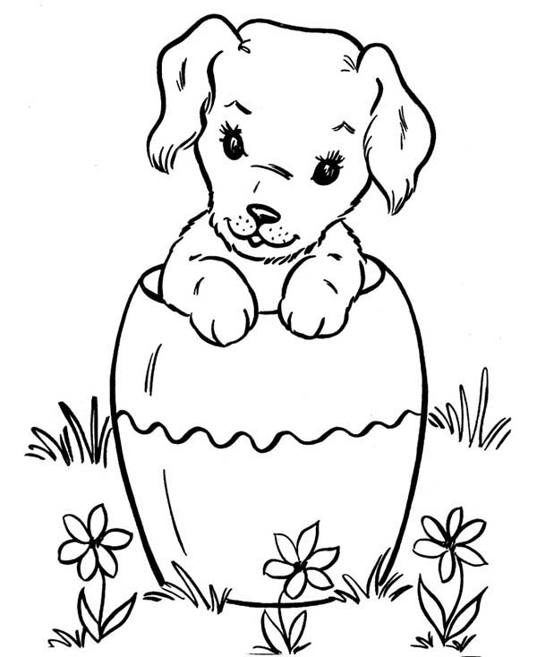 Pet, : Funny Pet Dog in a Bucket Coloring Page