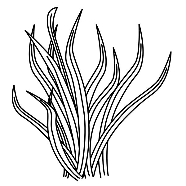 Plants, : Grass Plants Coloring Page