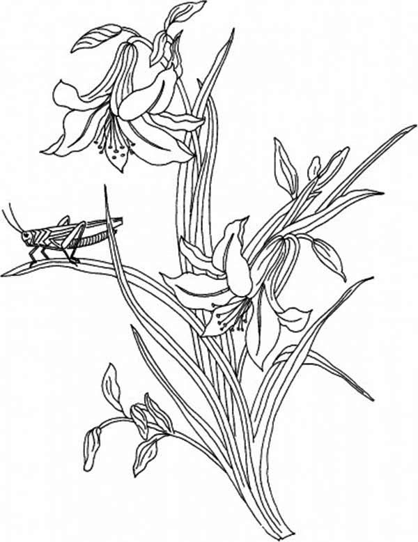 Plants, : Grasshopper Standing on the Plants Coloring Page