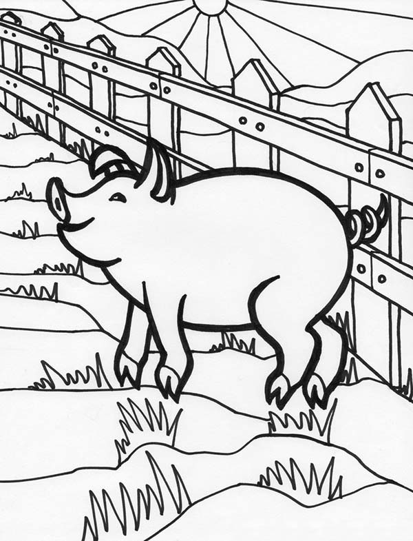 Pig, : Happy Pig Coloring Page