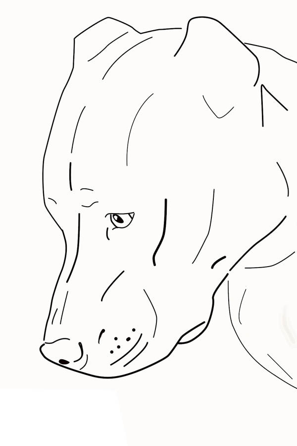 Pitbull, : Head of Sad Pitbull Coloring Page