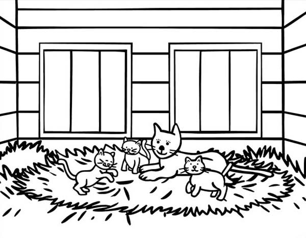 Pet, : Household Pet for Cat Coloring Page