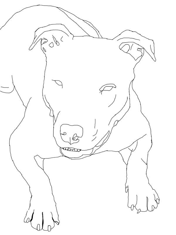 How To Draw Pitbull Coloring Page