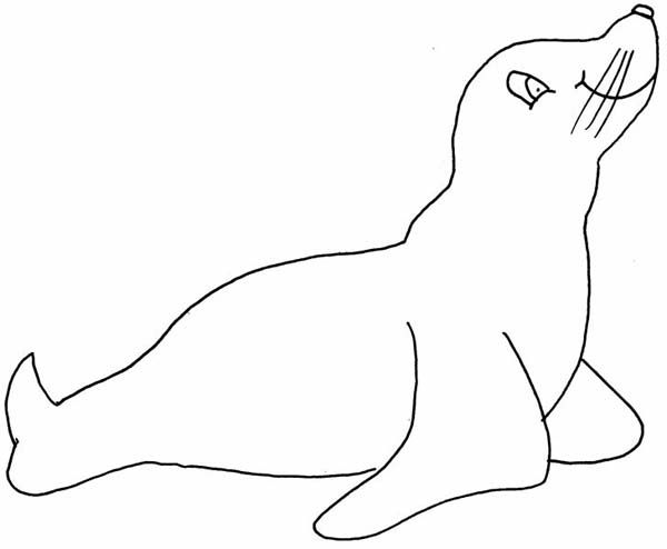 Seal, : How to Draw a Seal Coloring Page
