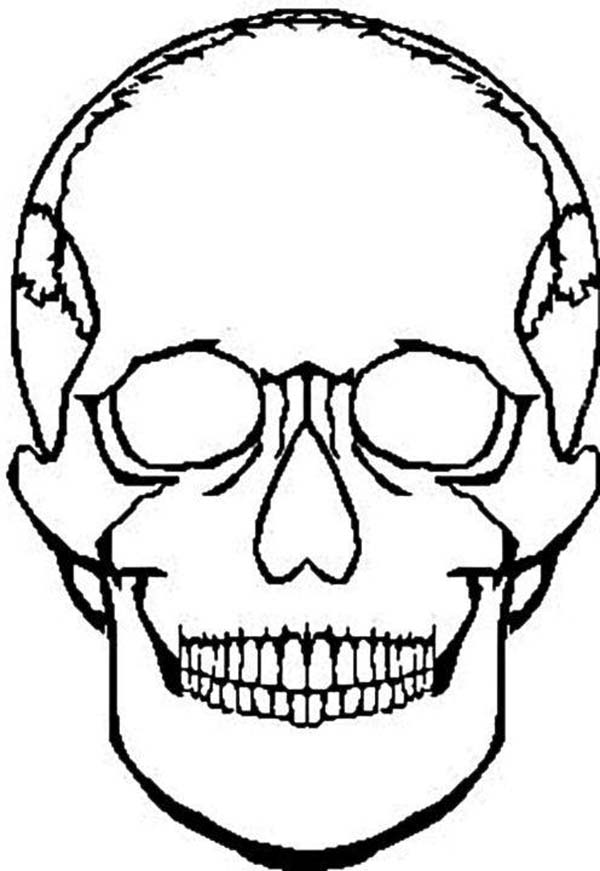 Human Head Skull Coloring Page Coloring Sky