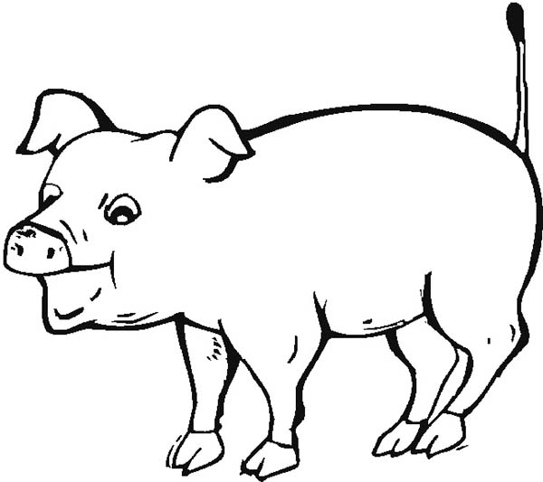 Pig, : Hungry Pig Want to Eat Coloring Page