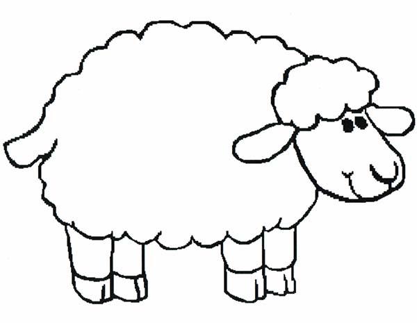 Sheep, : Introducing Sheep to Kindergarten Kids Coloring Page