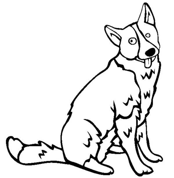 Pet, : Karelian Bear Dog for Pet Coloring Page