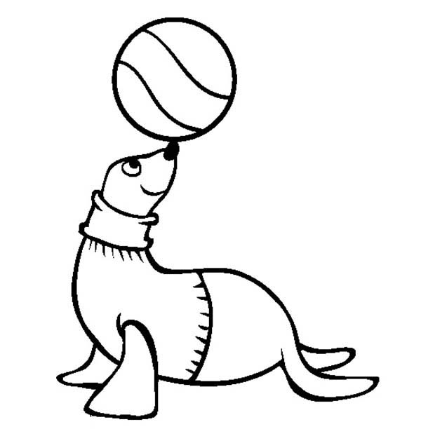Seal, : Kindergarten Kids Learn about Seal Coloring Page