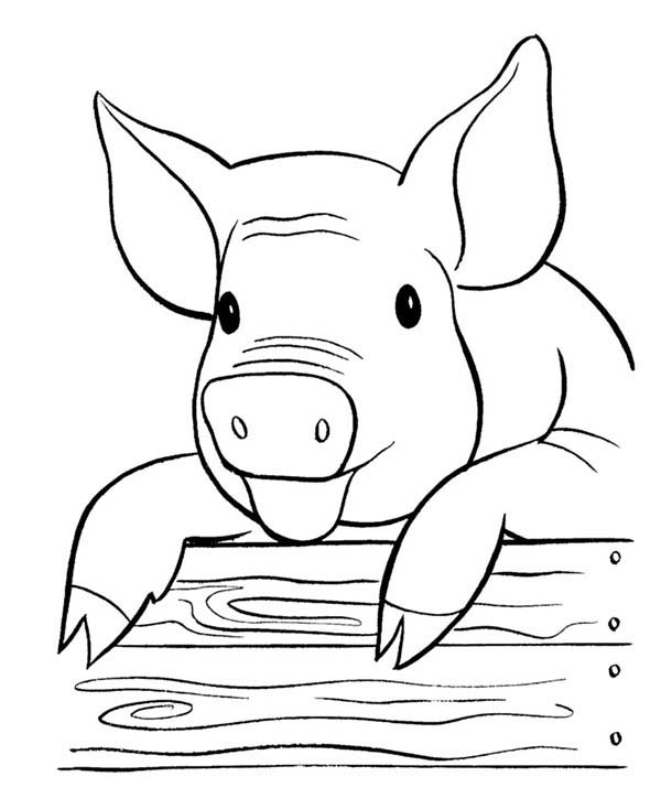 Pig, : Laughing Pig Coloring Page
