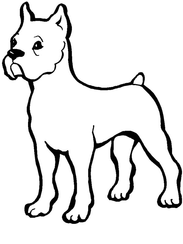 Pitbull, : Little Pitbull Coloring Page