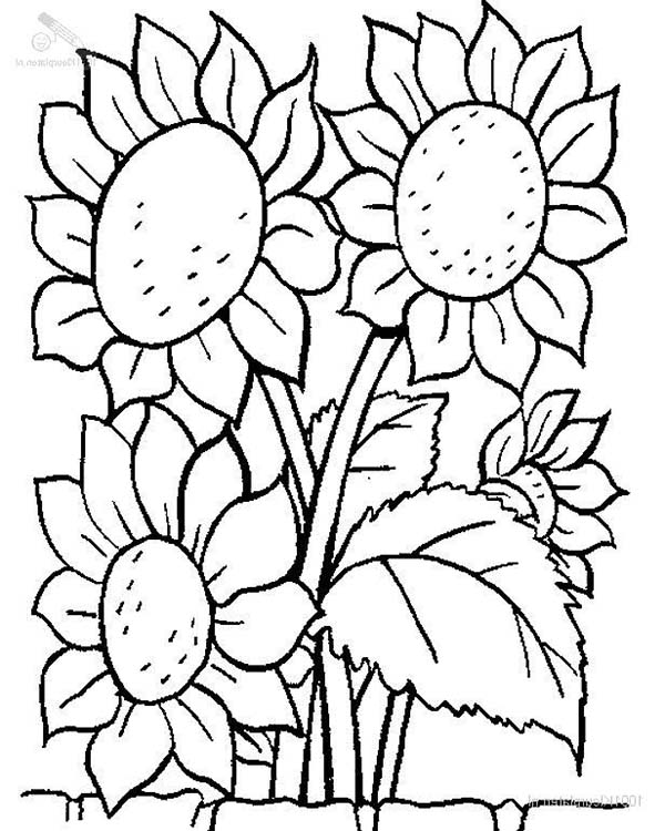 Plants, : Lovely Sunflower Plants Coloring Page