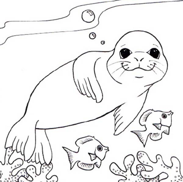 Seal, : Monk Seal and Two Little Fish Coloring Page