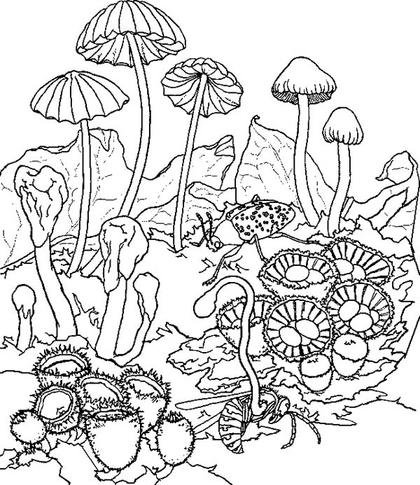 Plants, : Mushroom Plants Coloring Page