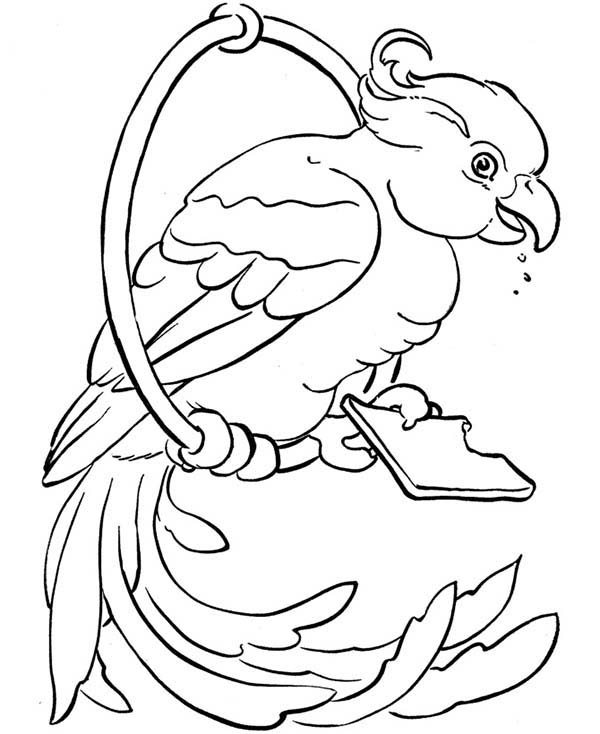 Pet, : Pet Bird Coloring Page
