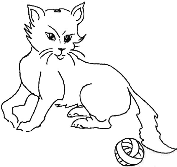 Pet, : Pet Cat Coloring Page for Kids