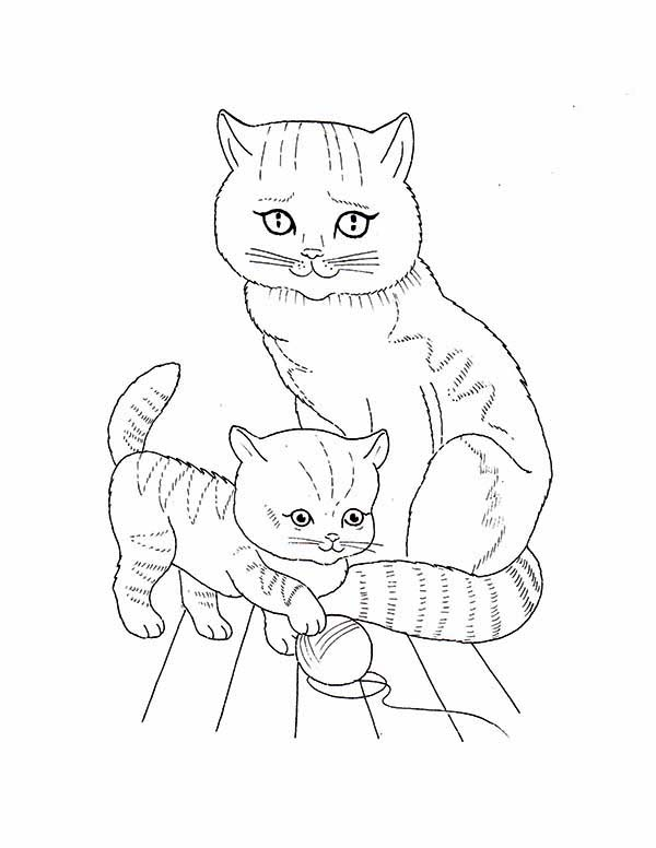 Pet, : Pet Cat and Kitten Coloring Page
