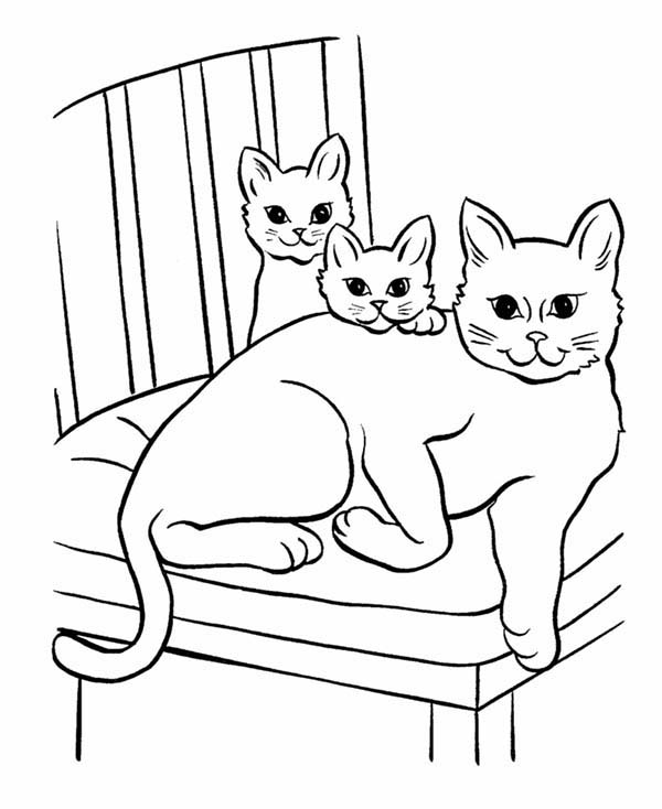 Pet, : Pet Cat and Twi Little Kitten Coloring Page