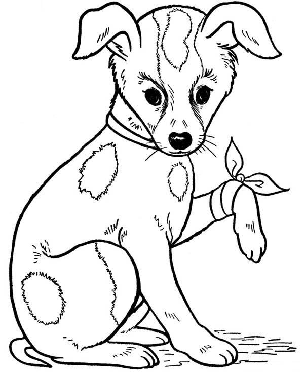 Pet, : Pet Dog is Injured Coloring Page