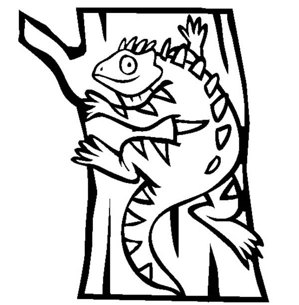 Pet, : Pet Exotic Iguana Pet Coloring Page