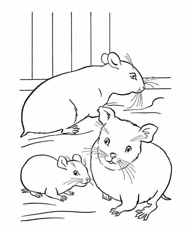 Pet, : Pet Hamster for Kids Coloring Page