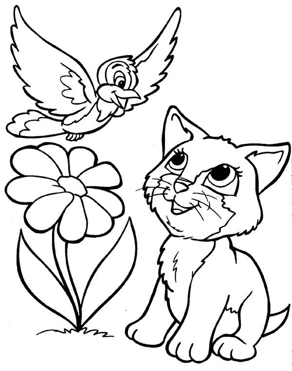 Pet, : Pet Kitten Play at Yard Coloring Page
