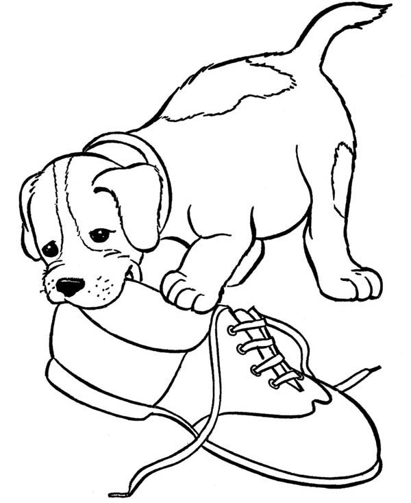 Pet, : Pet Puppy Play with Shoe Coloring Page