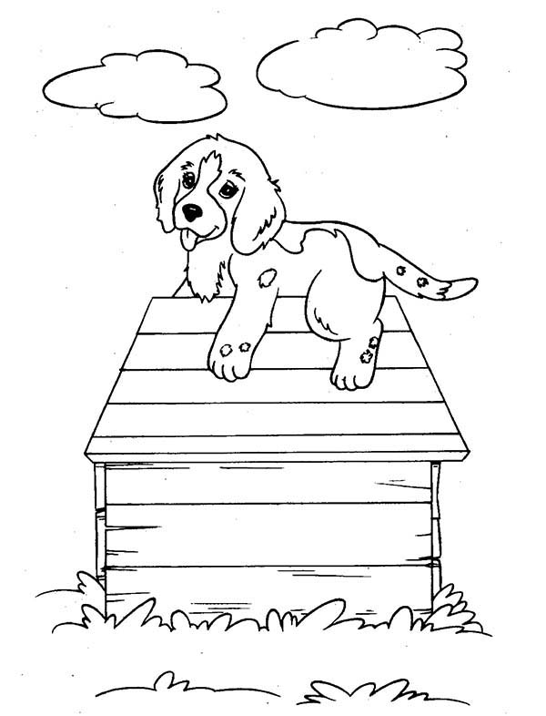 Pet, : Pet Puppy and His House Coloring Page