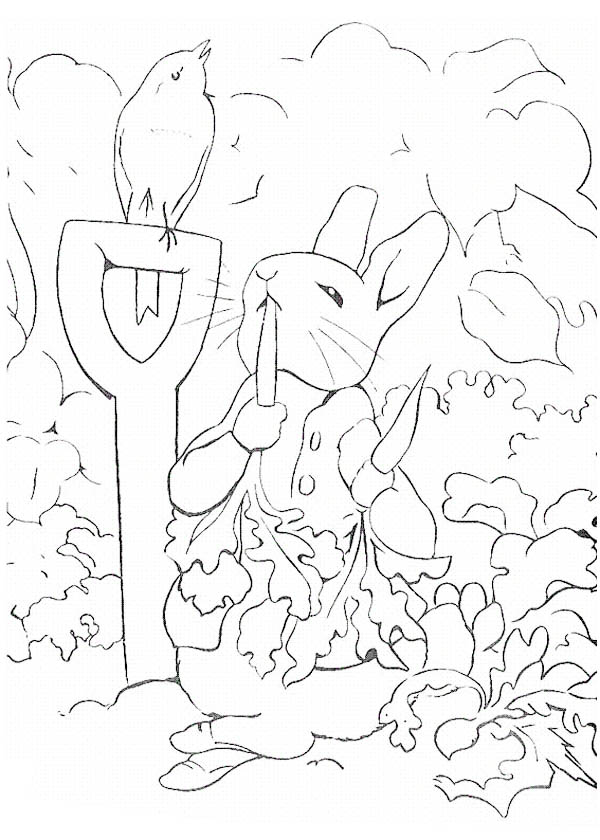 Peter Rabbit, : Peter Rabbit Eating so Many Carrot Coloring Page