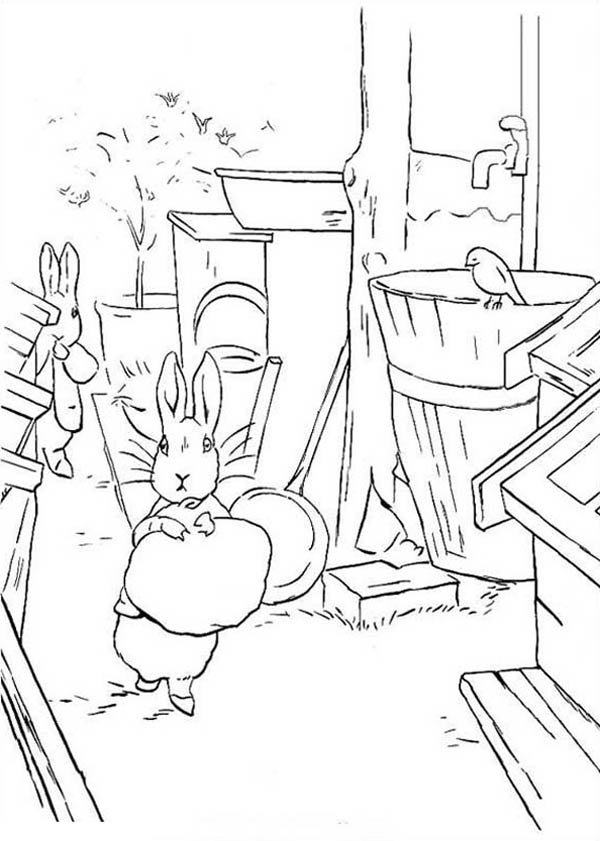 Peter Rabbit, : Peter Rabbit Looking for Water Coloring Page