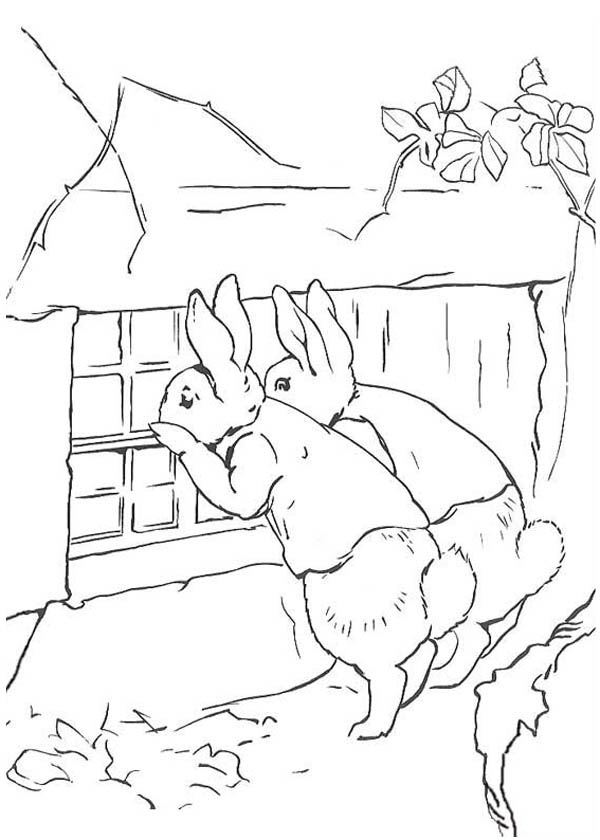 Peter Rabbit, : Peter Rabbit Sister Peeping at the Window Coloring Page