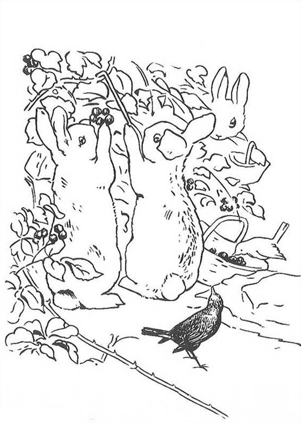 Peter Rabbit, : Peter Rabbit Sister Picking Raspberry Coloring Page