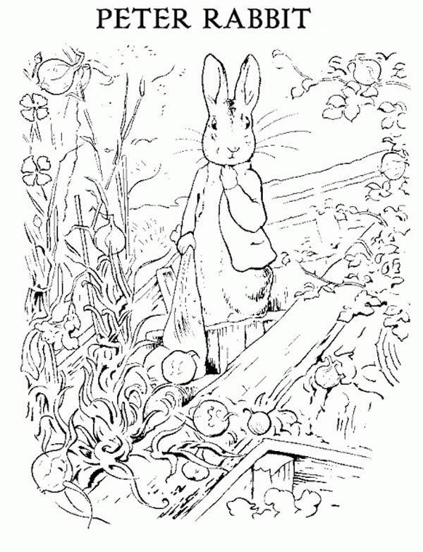 Peter Rabbit, : Peter Rabbit Stealing Radish Coloring Page