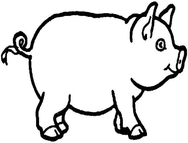 Pig, : Picture of Pig Coloring Page