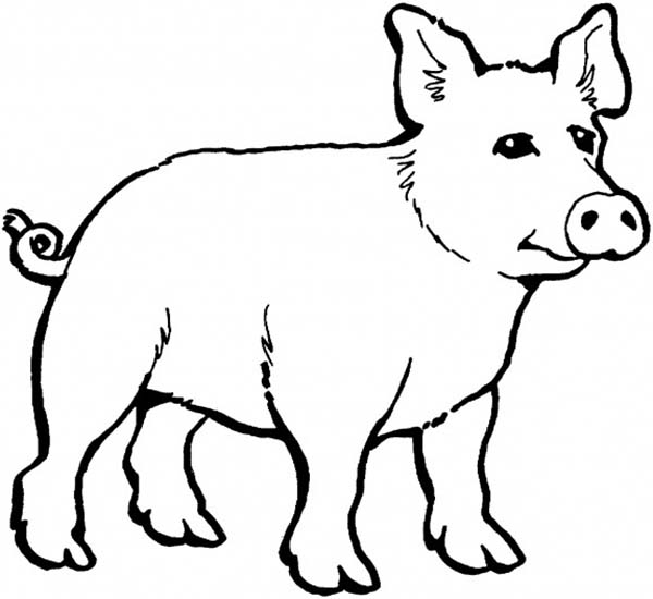 Pig, : Pig Coloring Page for Kids
