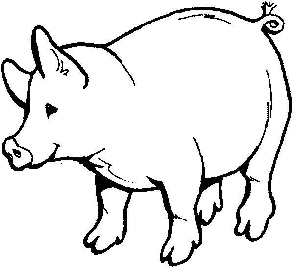 Pig, : Pig Drawings for Kids Coloring Page