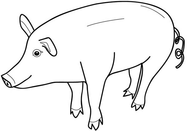 Pig, : Pig Look Like Piggy Bank Coloring Page