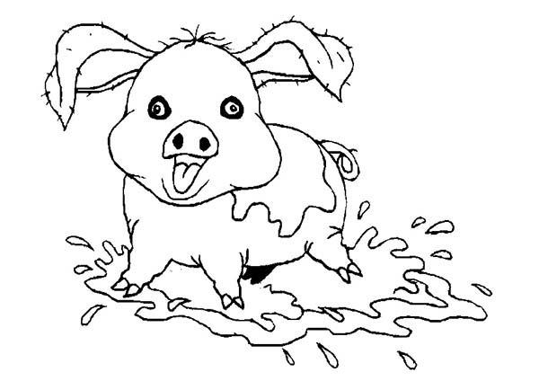 Pig, : Pig Love to Bath in Mud Coloring Page