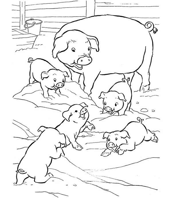 Pig Mother And Her Babies Coloring Page : Coloring Sky