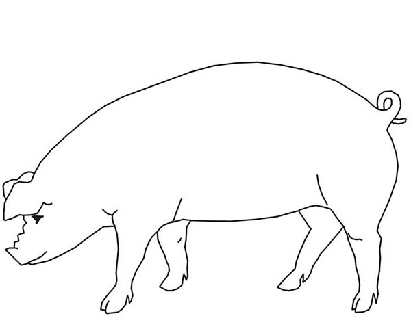 Pig, : Pig Outline Coloring Page