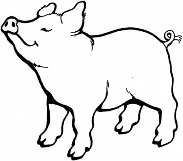 Pig, : Pig Smell Something Nice Coloring Page