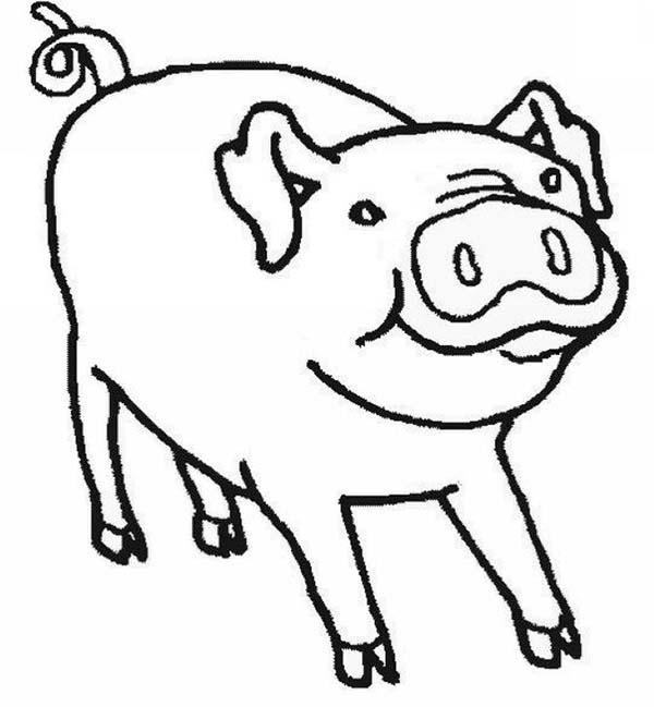 Pig, : Pig Sniffing Coloring Page