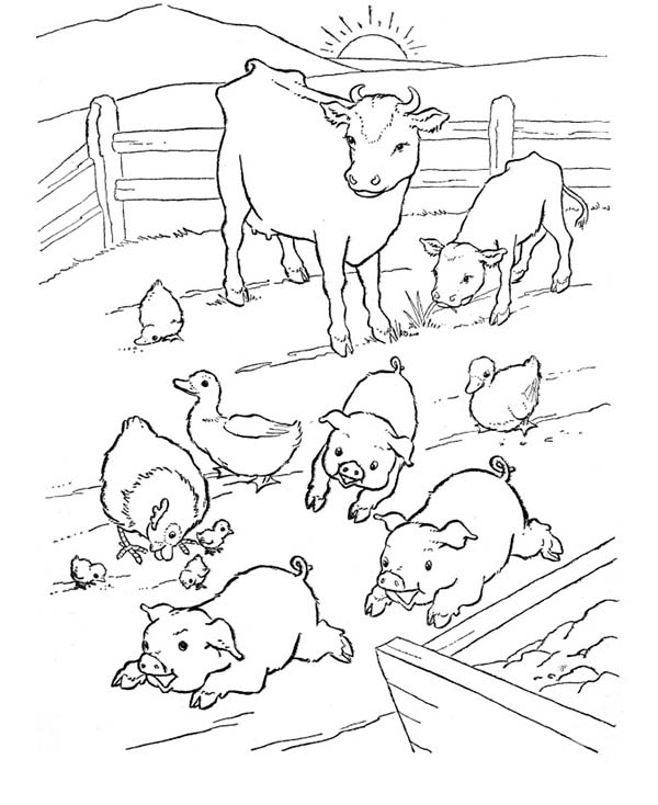 Pig, : Pig at Farm Coloring Page