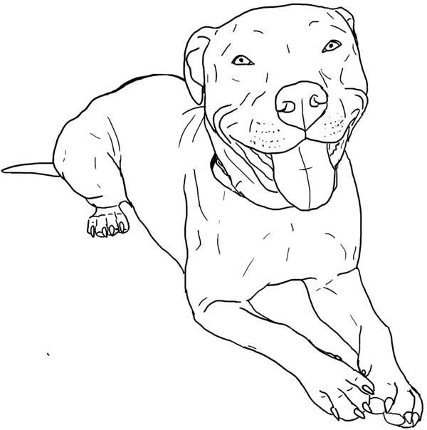 Pitbull, : Pitbull Coloring Page