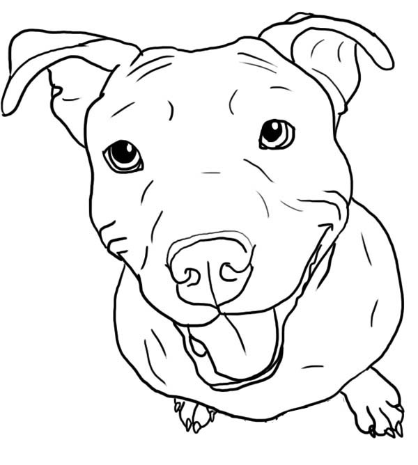 Pitbull, : Pitbull Stick Her Tongue Out Coloring Page